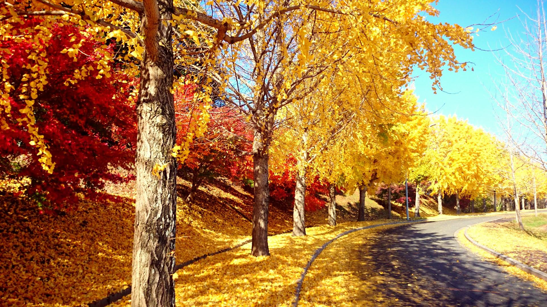Autumn di Kyutech Iizuka