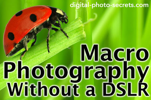 Macro Photography Without a DSLR