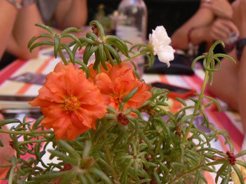 fleurs sur la table.jpg