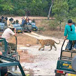 'Now, wildlife photography has become a form of trophy hunting' - The Times of India