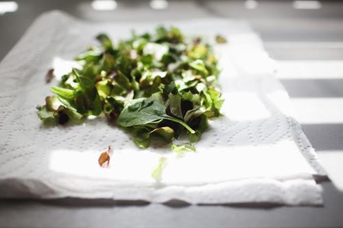 lettuce1 copy