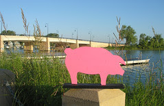 bay of pig