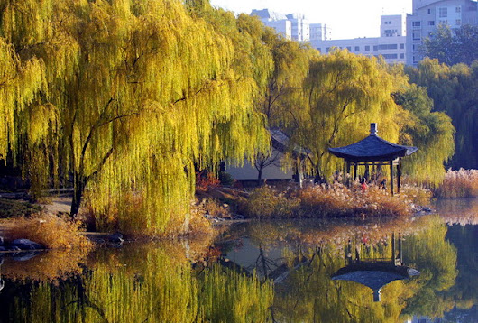 Liuyin Park (柳荫公园) and its green willows | Scout Real Estate