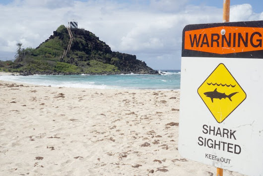 Worried about shark attacks or terrorism? Here's how to think about the real risk of rare events