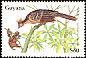 Hoatzin Opisthocomus hoazin
