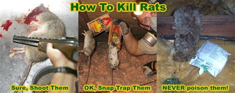 How to Poison Rats Effectively   Methods and Strategies