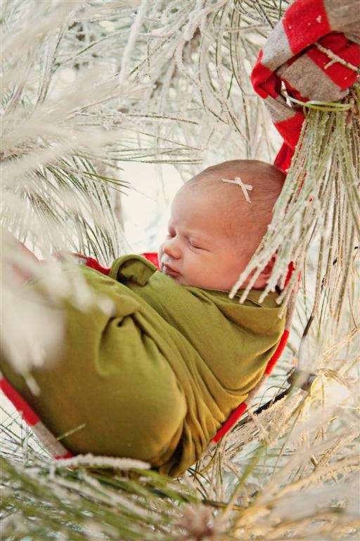 We loved this photographer's shot of baby in festive boughs. #babysfirstsapp