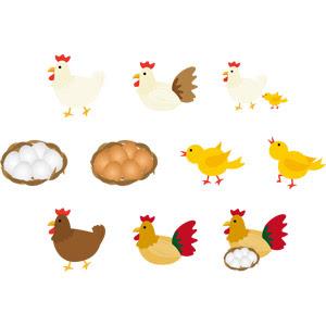 鶏ニワトリ Gahag 著作権フリー写真イラスト素材集