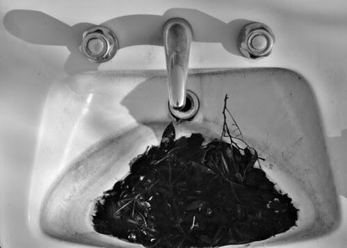 In the Sink, In the Farmyard