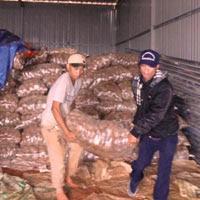 Cơ quan chức năng đem 26 tấn khoai tây hồng Trung Quốc nhiễm chất độc hại đi tiêu hủy