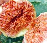【尾道向島産・万汐農園】いちじく(蓬莱柿)大玉約8玉入 贈答用 フルーツキャップ入り