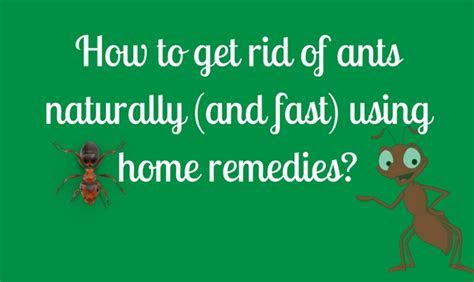 how to get rid of ants using peppermint oil   How To