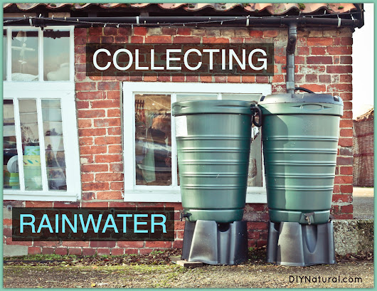 Collecting Rainwater In Diy And Commercial Rain Barrels
