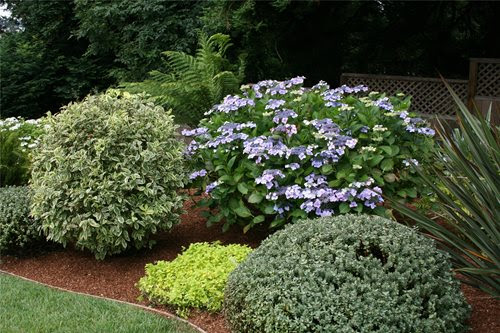 Low Maintenance Front Yard Landscaping