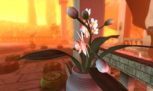 Wheres Dim Sum? #005 - Orchids