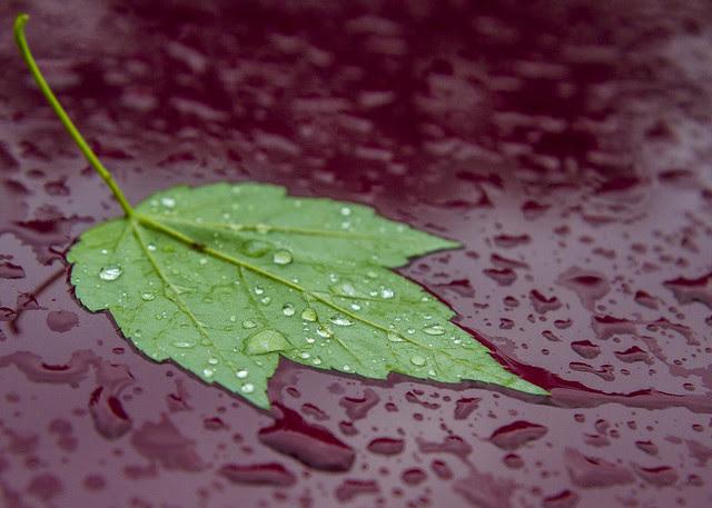 Leaf on Car Study #1