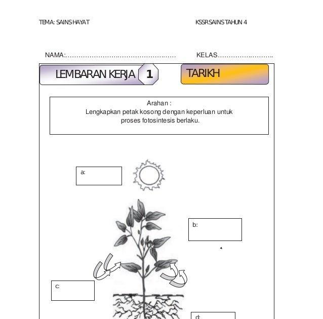 Soalan Sains Tahun 4 Fotosintesis Selangor J