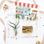 Air Plant Gift Box Ideas | Unique Succulent Gifts for Thanksgiving Valentine's Day Card