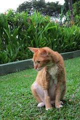 Baby Kat's last stroll in the garden