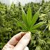 Study: Medical Marijuana Laws Reduce Prescription Drug Spending