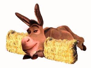 donkey indecisive