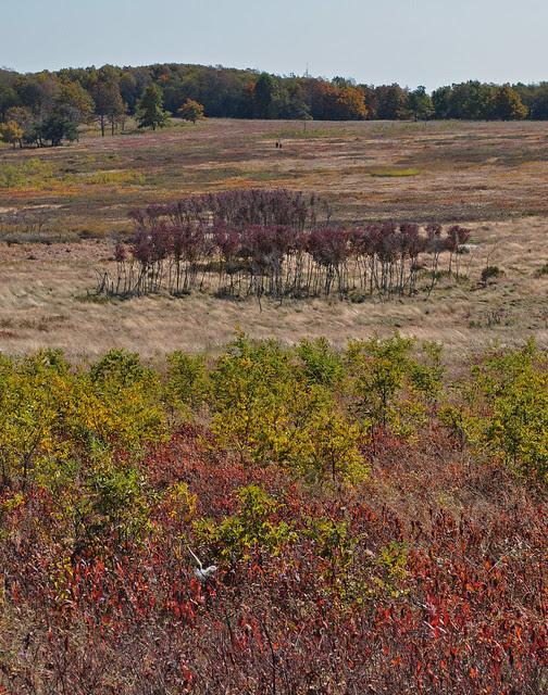 Big Meadows (3)