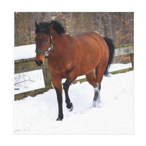 Bay horse running through the snow canvas print