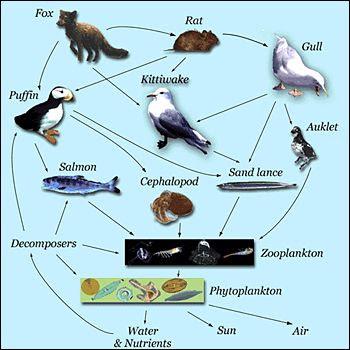 Quia - Life Science - Lesson 5: Unique Niche, Food Chains ...