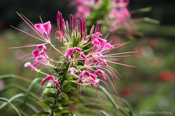 first impressions of a new camera, a Canon 7D