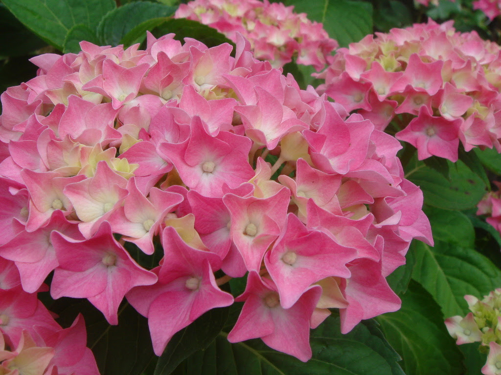 6月の花 ほぼ完璧 ボルドーガイド