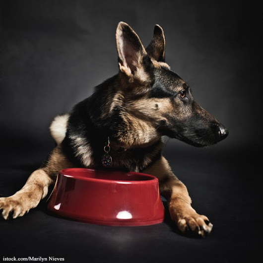 Smallbatch Pets Recalls Dog Food for Salmonella and Listeria
