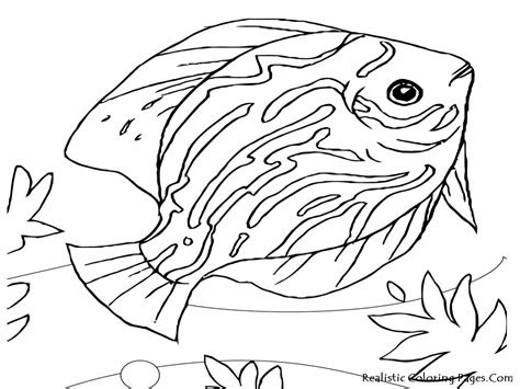 realistic animals coloring pages  coloring pages