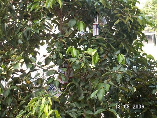 Strange Fruit (1)