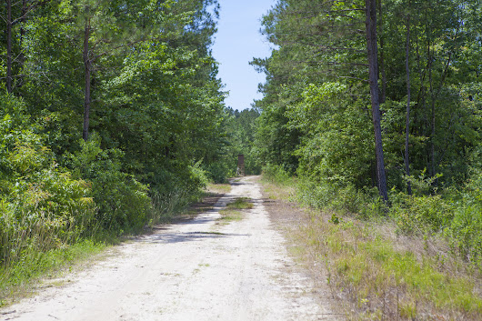 1585 Acres on Hwy 111 near Wilson and Saratoga in Wilson County NC
