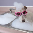 Why is dog grooming important? - Canine Couture Grooming