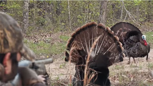 Advice for the First-time Turkey Hunter