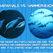 Narwhals vs Hammerheads