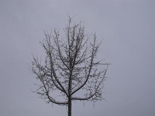ninge 003 by martamaghiar
