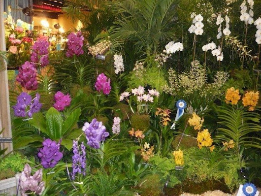 An orchid lover's paradise coming to Fort Lauderdale