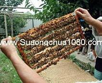 sua ong chua tuoi nguyen chat ban o dau