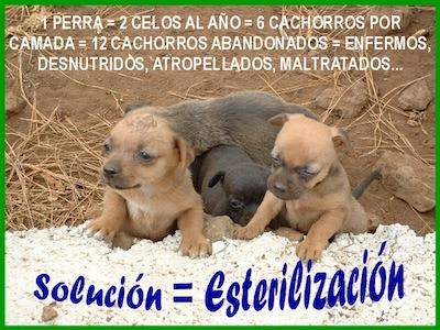 Cuidados al esterilizar un perro y mantenerlo saludable