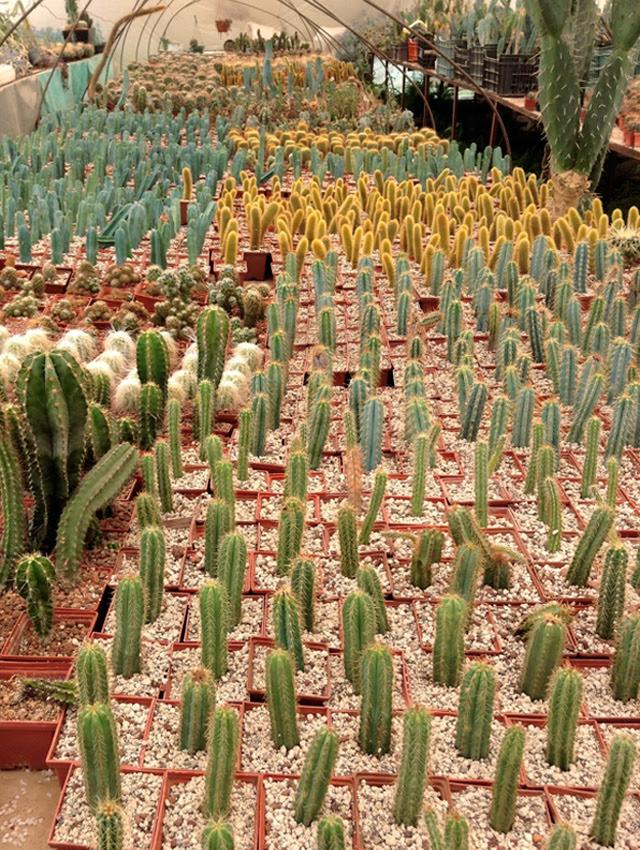 Vivero de Cactus La Union
