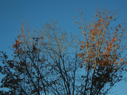 DSCN7289 - Fall Leaves