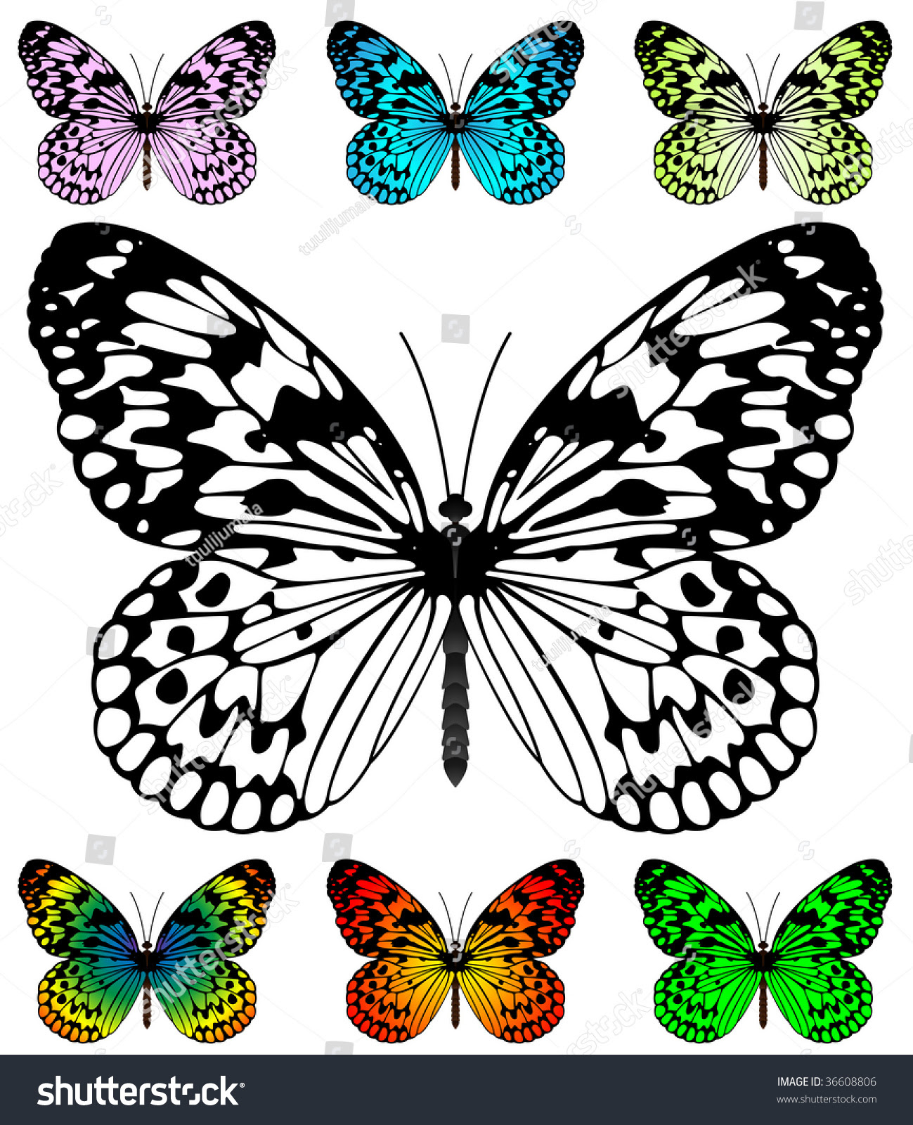 Butterfly Vector Template With Samples. Easy Editable Wings Color ...