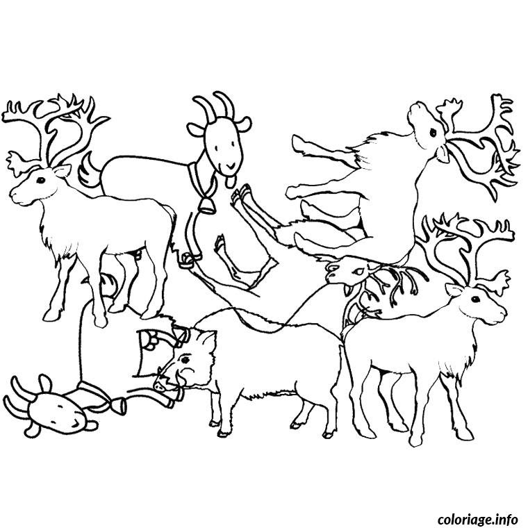 Coloriage Animaux Pole Nord Jecoloriecom
