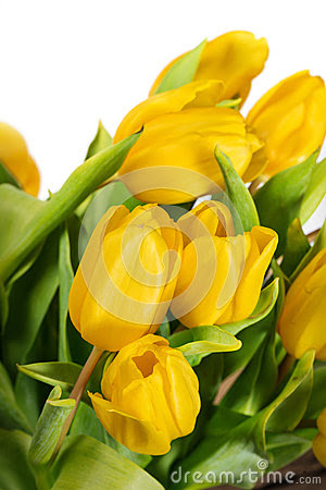 Yellow Tulip Flower Meaning
