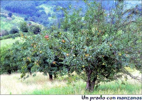 un prado con manzanos