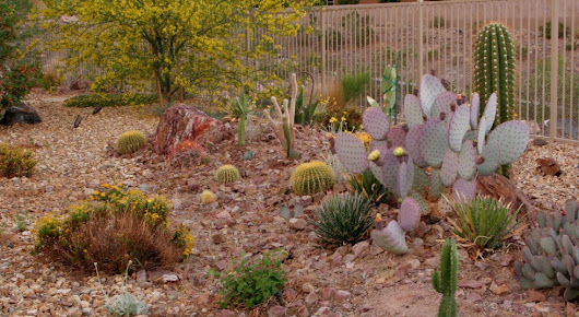 Xeriscapes Las Vegas Design Company - Green Planet