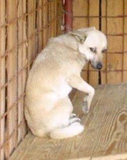 Zitate Spruchsammlung Haustiersuche At Private