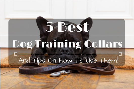 5 Best Dog Training Collars And Tips On How To Use Them! - 2016